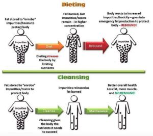 Why Detox Diets Don T Work by Why Diets Don T Work Nutrition Vfa Learning