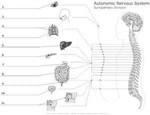 nervous system worksheet the fantastic nervous system
