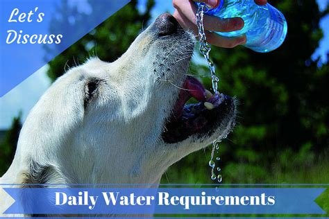how much water should a puppy drink how much water should your labrador drink each day