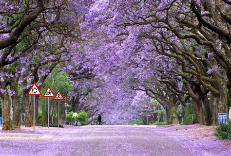 Sandal Ungu Porto world s most beautiful trees photography angelic hugs