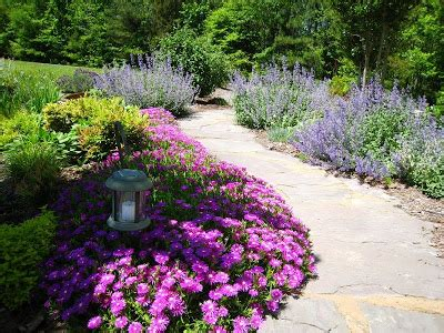 what are your favorite edging plants