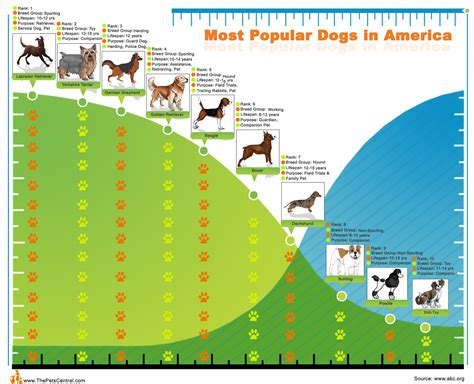 most popular dogs top10 most popular dogs in america visual ly