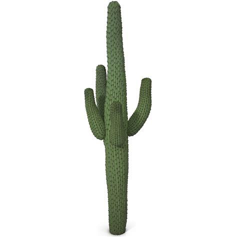 Suhzie Stelan Cactus Pictures Qige87