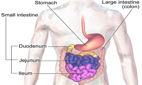 intestinal blockage symptoms bowel obstruction several disorders are known to cause this disorder
