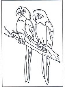 birds of prey coloring pages