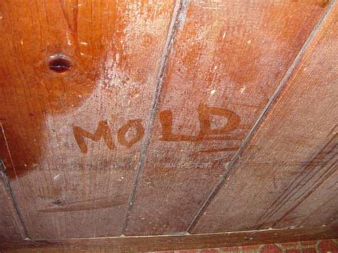 Home Mould Problems in Great Britain   Controlling Mould