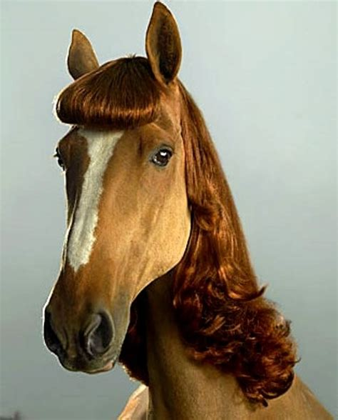 cute hairstyles for horses 17 best images about horse mane and tail styles on