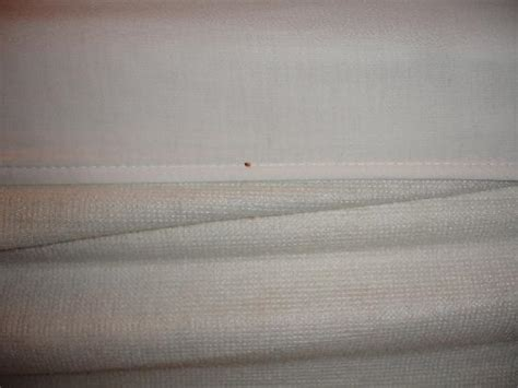 bed bugs michigan bed bug droppings picture of quality inn suites
