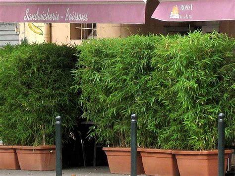 Sichtschutz Terrasse Bambus by Die Besten 17 Ideen Zu Bambus Sichtschutz Auf
