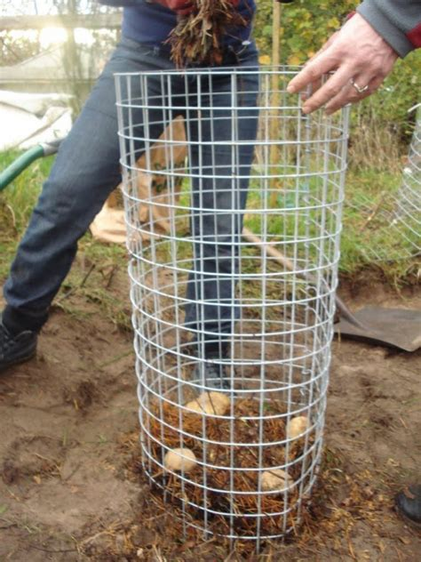 How To Make A Potato Planter by Eight And A Half No Dig Ways To Grow The Humble Spud