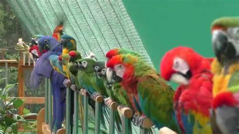 patterns in nature documentary shuka vana rehabilitation centre for birds youtube