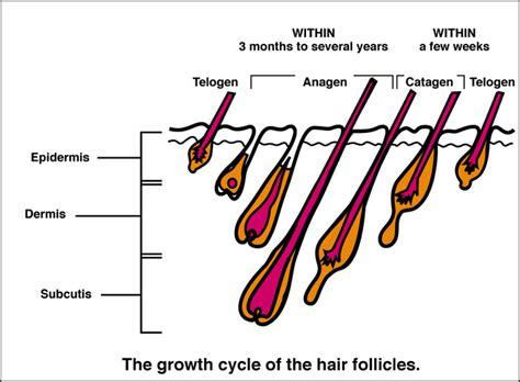 tweezing vs shaving pubic area for women electrolysis hair removal kb electrolysis new york