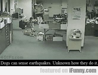 can dogs sense dogs can sense earthquakes ifunny