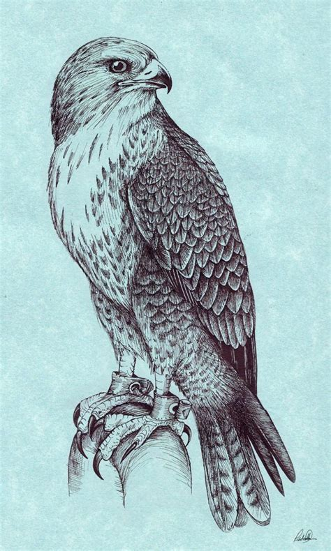 hawk tattoo pinterest pin by anna terblanche on hawk tattoos pinterest