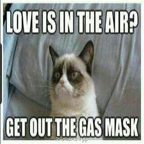 angry valentines day quotes 42 best ideas about grumpy cat on grumpy cat