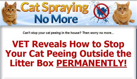 how to stop peeing the bed how to stop a cat from peeing on the bed 28 images why