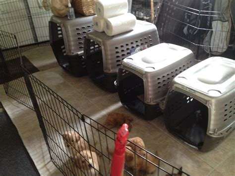 when to start your puppy when to start crate your puppy dogs our friends photo