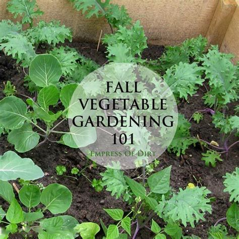 Fall Vegetable Gardening 101 Fall Garden Vegetables