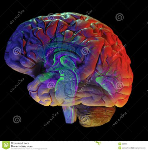 brain on black royalty free stock photo image 968265