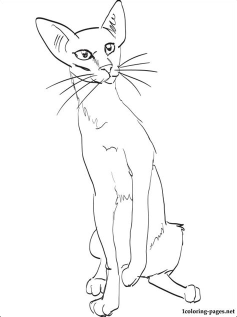 shorthair cat coloring page coloring pages