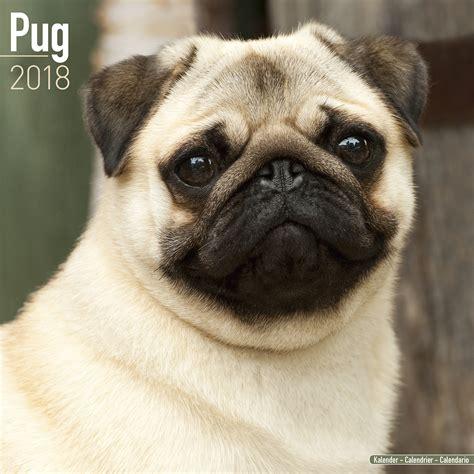 pug home pug calendar 2018 10062 18 pug breeds