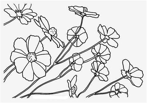 Free Coloring Pages Of Rainforest Flowers Rainforest Plants Coloring Pages