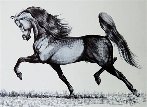 the spirited arabian horse drawing by cheryl poland