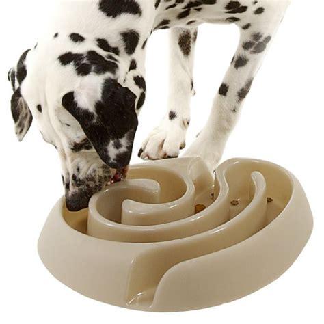 maze bowl maze food bowl