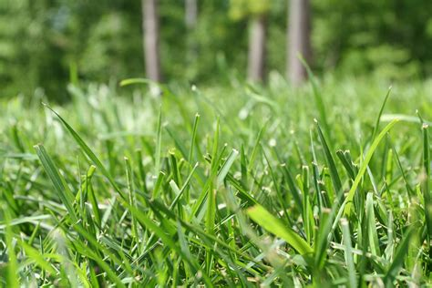 is your lawn ready for spring planting to grow