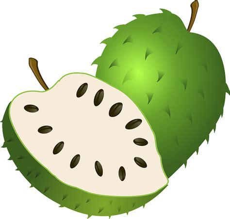Manfaat Bio Dan Nya 1001 manfaat khasiat buah sirsak daun biji serta akar