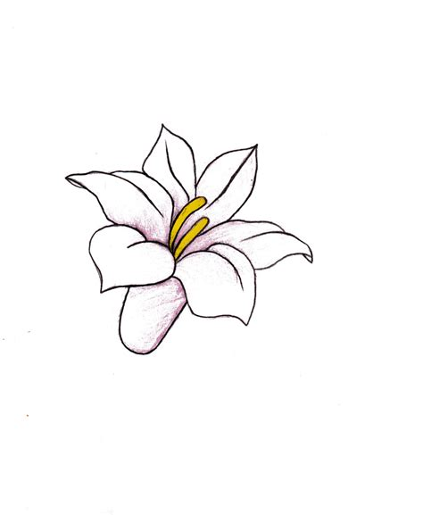 Drawings Of Flowers by Flower Drawing By Alexandraxaccidental On Deviantart