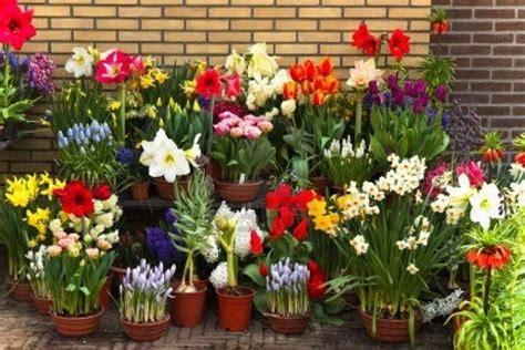 vasi x fiori vasi per fiori vasi