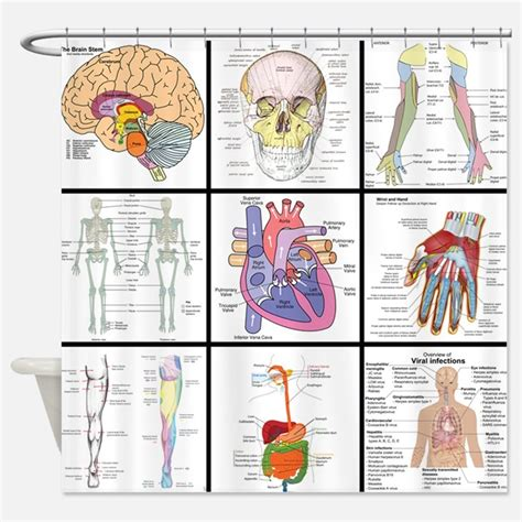 anatomy shower curtain anatomy shower curtains anatomy fabric shower curtain liner