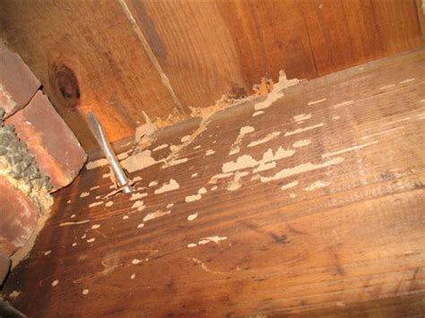 easy methods    rid  termites