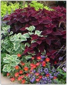 heat tolerant plants must make a list and take to