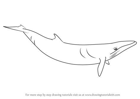 minke whale coloring page minke whale drawing
