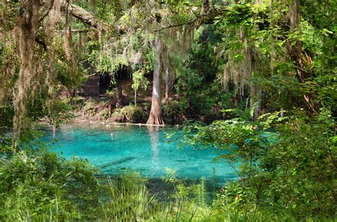 fanning springs state park fanning springs state park florida state parks