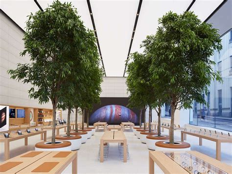 freedom tree design home store apple store by jony ive photos business insider
