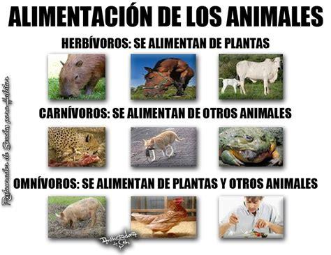 imagenes de animales herbivoros y carnivoros animales carn 237 voros herb 237 voros y omn 237 voros animales