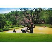 Casa De Fazenda Imagem 011 Search Pictures Photos