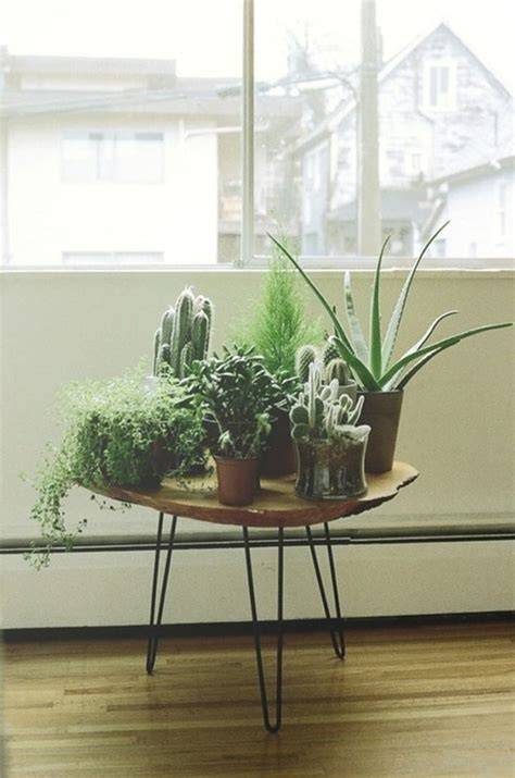 home decor with indoor plants inspiration decorating with indoor plants checks and spots