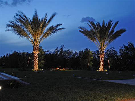 Our Blog Outdoor Lighting Perspectives Outdoor Light Up Palm Tree