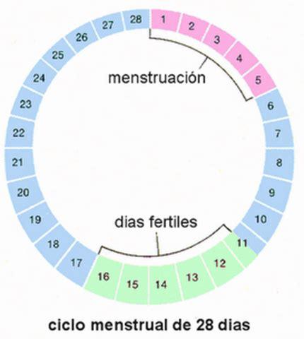 Calendario Fertilidad Calendario De Fertilidad Y Ovulaci 243 N Cu 225 Ndo Quedar Embarazada
