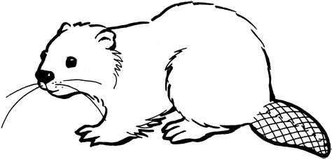 beaver coloring pages preschool free beaver coloring pages