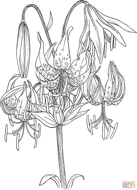 tiger lily coloring page lilium superbum or turk s cap lily coloring online super