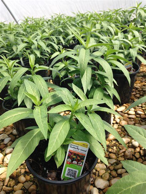 color spot nursery mega grower color spot nursery to consider growing clean