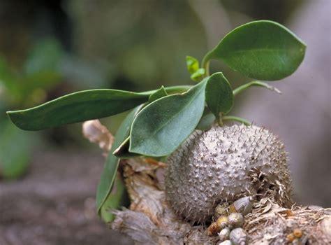 Images Gt Plants Ant In Vegetable Garden