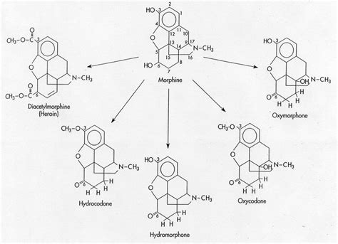 Chemical Detox For Opiates by Image Gallery Opiates Structure