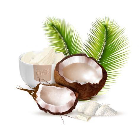 coconut vectors   psd files