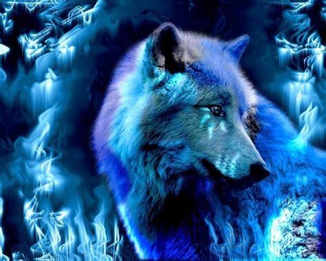 hewan peliharaan gambar serigala images